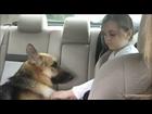 Rescue dog saves little girl from dangerous snake BBC News Magazine