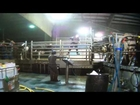 WATCH: Cows Kicked, Beaten, and Hanged at Massive Dairy Factory Farm
