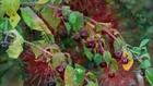 Dünyadaki En Zehirli 10 Bitki.!