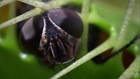 Böcek Yiyen Bitki | Venüs Sinek Kapan