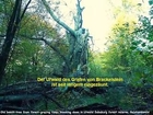 Im Brackelsteiner Urwald an Baum gefesselt · Kurze Lederhose von Diana, Jig und Quee 19