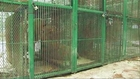 Raw: Animals Rescued From Private Mexican Zoo