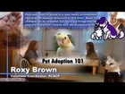 Pet Adoption 101: What to Think About - What to Do